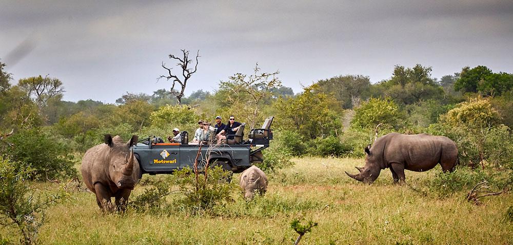Motswari Safari